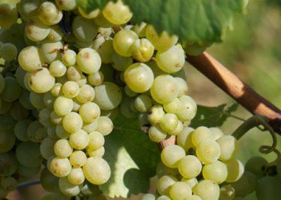 Winzer / Weinverkauf